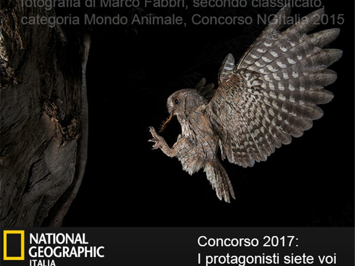 Topcolor Dream for National Geographic photo contest 2017